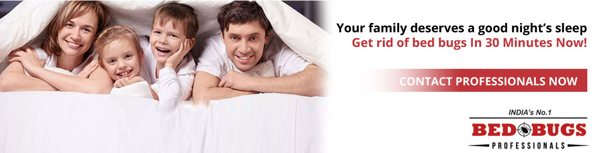 Bed Bugs Control in Bangalore