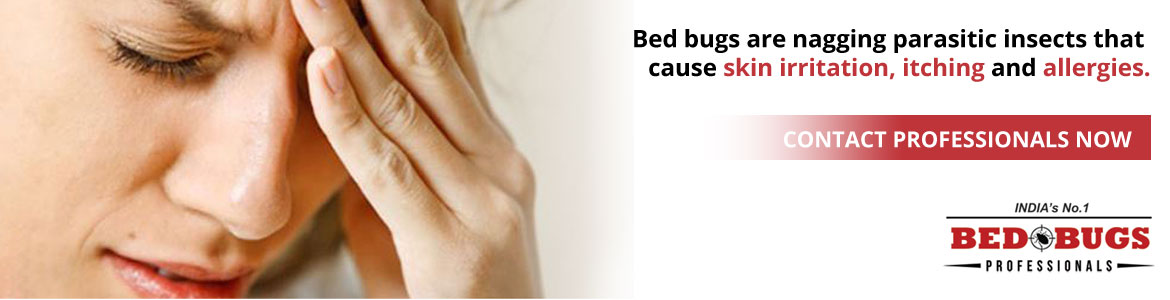 Bed Bugs Control In Navi Mumbai
